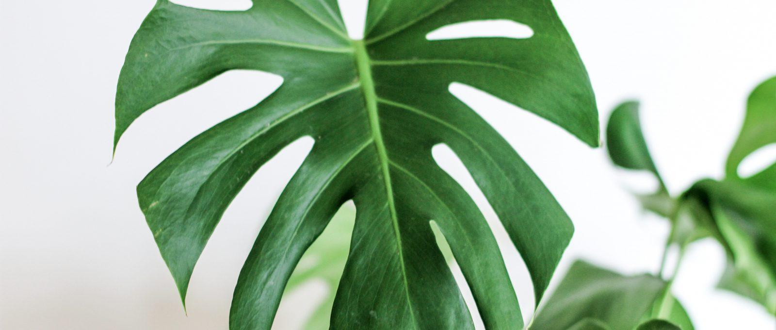 Woonatelier_De voordelen van veel groen in huis
