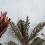 Woonatelier_wintertuin